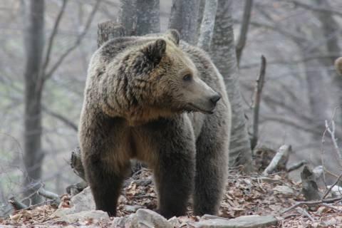 Ξύπνησαν οι αρκούδες στο Νυμφαίο