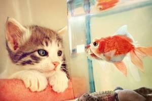 Όταν τo ψάρι βγάζει νοκ-άουτ τη γάτα (video)