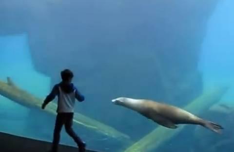 Το παιχνίδι αυτιστικού παιδιού με θαλάσσιο λιοντάρι (vid)