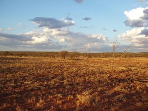 Επέζησε σε αυστραλιανή έρημο τρώγοντας έντομα για δύο εβδμάδες