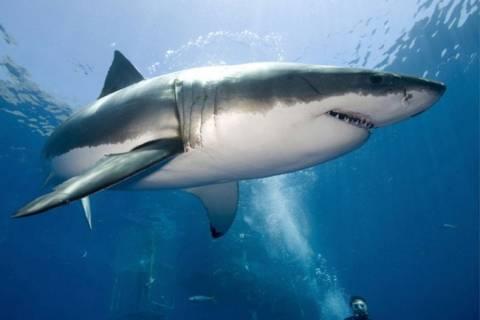 Μια ανάσα από τη Βρετανία ο καρχαρίας Lydia (pic)