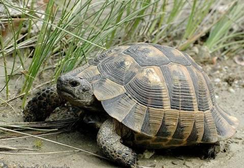 Πήγε να φιλήσει μια χελώνα και... έγινε ρεζίλι σε όλον τον κόσμο (pic)