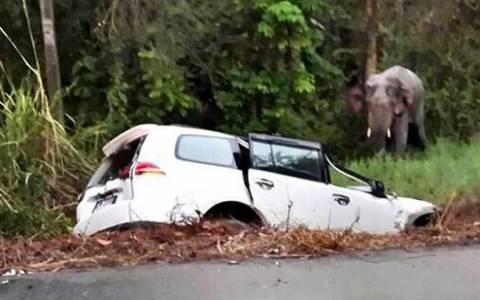 Ελέφαντας προκάλεσε τον θάνατο έξι ατόμων (pic)