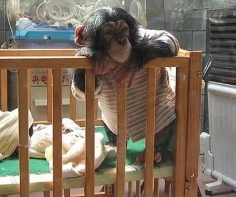 Παιδί σώζει χιμπαντζή από ύαινα! (βίντεο)