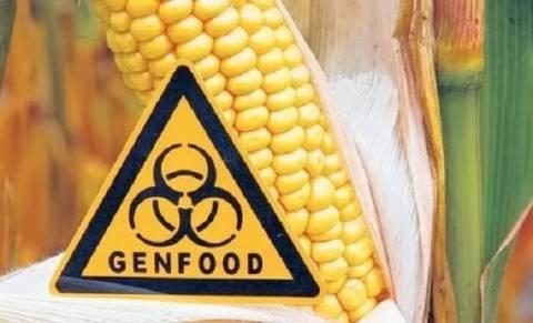 Γαλλία: Απαγορεύτηκε το γενετικά τροποποιημένο καλαμπόκι