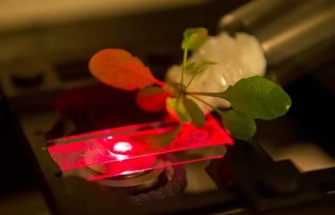 Τα πρώτα βιονικά φυτά με νανοσωματίδια είναι εδώ