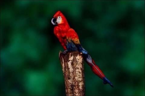 Τι πάει στραβά με τον παπαγάλο; Δείτε προσεκτικά τη φωτογραφία!