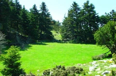 Νέο δάσος στο Δήμο Νεάπολης-Συκεών