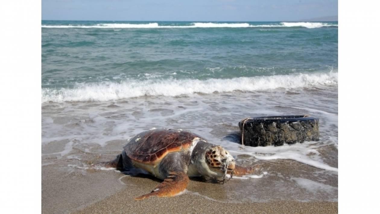 Nεκρή χελώνα Καρέτα – Καρέτα σε παραλία της Κρήτης