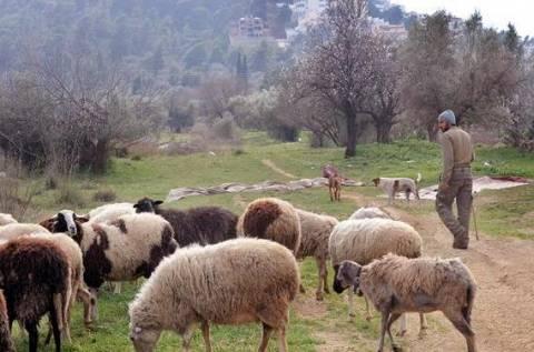 Την Τετάρτη καθορίζουν τη στάση τους οι κτηνοτρόφοι στην Πρέβεζα