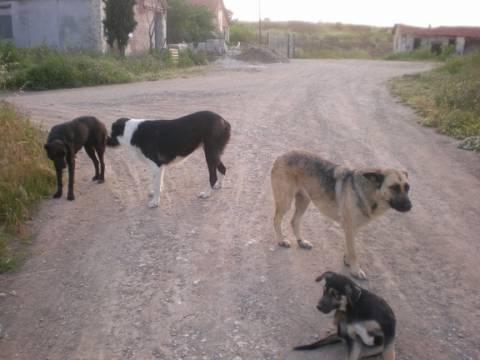 Λύση για τα αδέσποτα σκυλιά από το Δήμο Βέροιας
