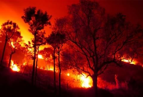 Δράμα: Συνελήφθη σπείρα εμπρηστών με τουλάχιστον 68 φωτιές!