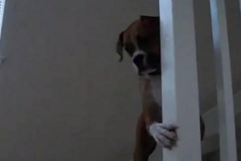 Απίστευτο! Σκύλος φοβάται ένα… (video)