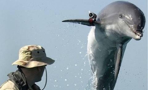 Στο ΠΝ της Ρωσίας τα δελφίνια μάχης της Κριμαίας