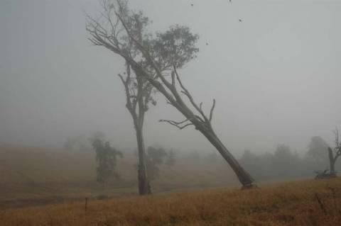 Δέντρο… αντεπιτίθεται σε σκοπευτή! (video)