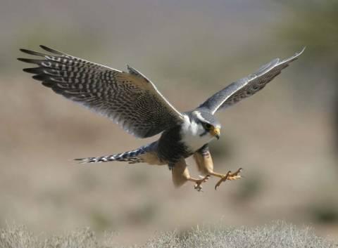 Σέρρες: Ανακοίνωση του Φιλοζωικού Ομίλου για σπάνια πουλιά