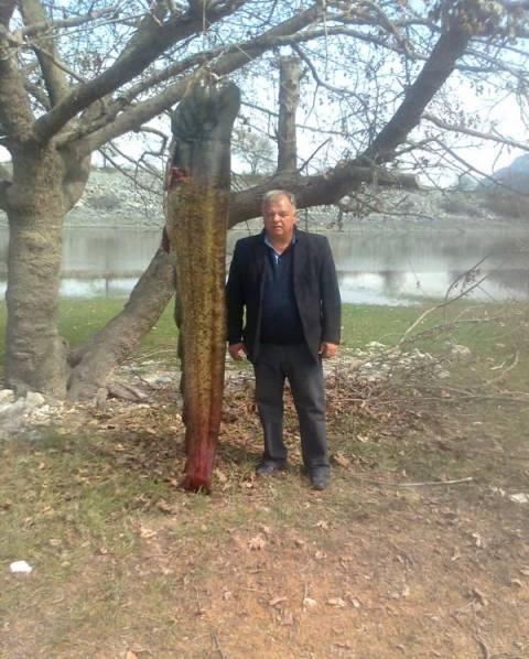 Γουλιανό… μαμούθ, 167 κιλών, ψάρεψαν αλιείς στο νομό Κοζάνης