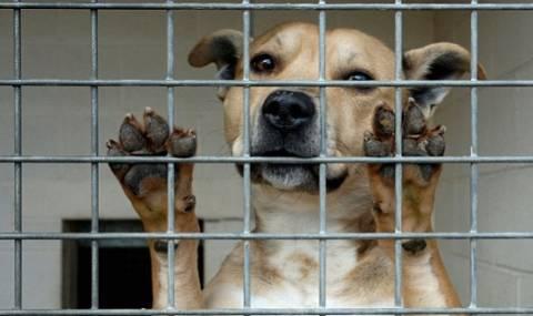 Ζούσε με 87 ζωντανά και 20 ψόφια σκυλιά