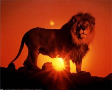Νέα στοιχεία «φωτίζουν» την καταγωγή και εξέλιξη των λιονταριών