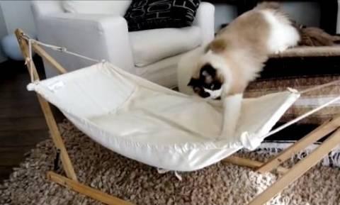 Γάτα εναντίον… αιώρας (video)