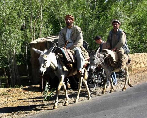 Μεταφέρουν ψηφοδέλτια με γαϊδούρια και μουλάρια