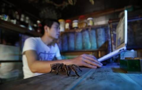 Βιετνάμ: Πιες το καφέ σου δίπλα σε ποντικούς και φίδια! (photos)