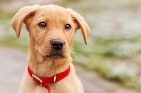 Γαλλία: Σκύλος μάρτυρας σε δίκη!