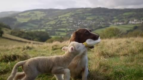 Το γλυκό βίντεο της μέρας: Ο σκύλος και το πρόβατο