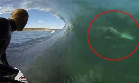 Απίστευτο βίντεο: Η στιγμή που καρχαρίας περνά ξυστά από σέρφερ!