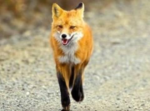 Πέμπτο κρούσμα λύσσας στα Τρίκαλα