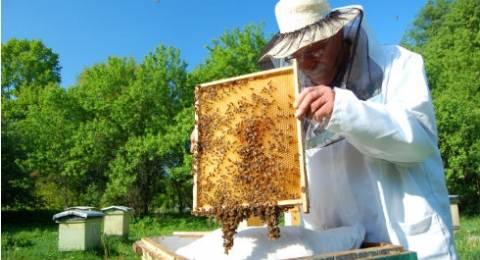 Δράμα: Τριήμερο ενημερωτικό σεμινάριο για νέους μελισσοκόμους