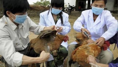 Η Ιαπωνία επιβεβαίωσε τα πρώτα από το 2011 κρούσματα γρίπης των πτηνών