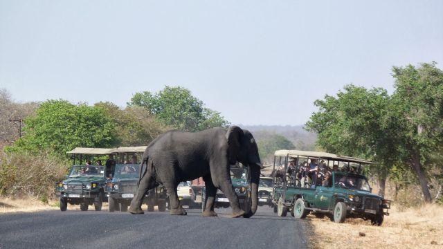safariiiiiiiiiiiii