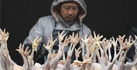 Μαζικές σφαγές πουλερικών στην Ιαπωνία