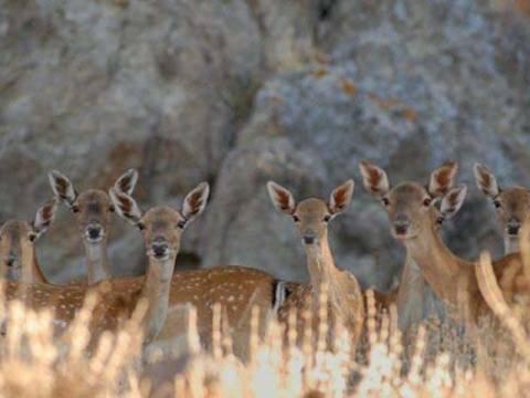 Εντείνονται οι έλεγχοι στα καταφύγια άγριας ζωής στη Ρόδο