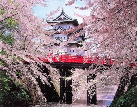 Μοναδικό: Ηanami, οι ανθισμένες κερασιές της Ιαπωνίας (pics)