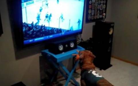 Σκύλος φανατικός με το χόκεϊ! (βίντεο)