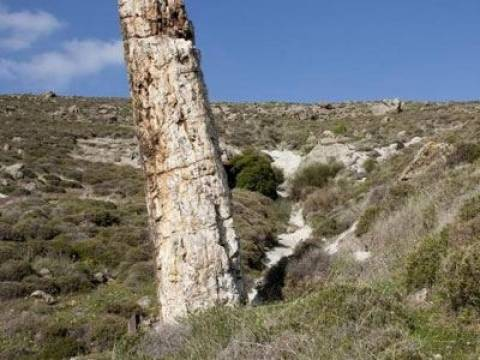 Το Απολιθωμένο Δάσος Λέσβου στον κατάλογο της UNESCO