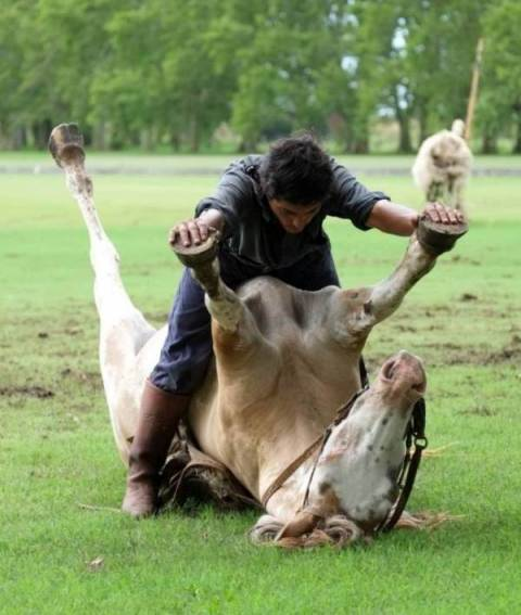 Αυτά τα άτομα αγαπούν υπερβολικά τα ζώα τους (gifs+photos)