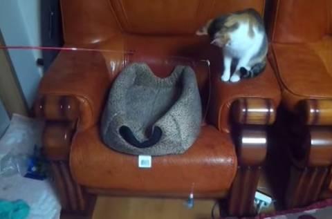 Το καλύτερο βίντεο με γάτες στην ιστορία!