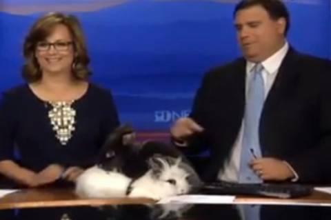 Ασυγκράτητα κουνέλια κάνουν σεξ στον… αέρα! (video)