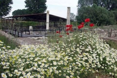 Πιερία: Τα φυτά των Θεών στο αρχαιολογικό πάρκο του Δίου