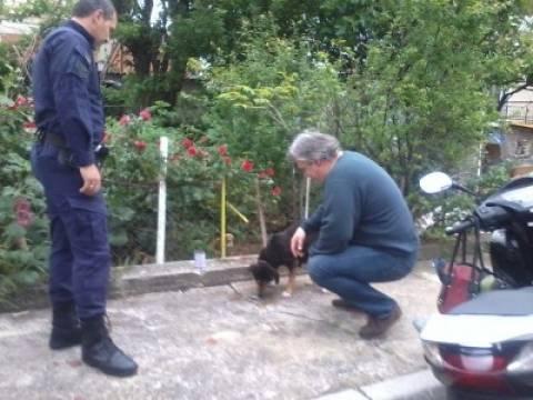 Λαμία: Επιχείρηση για την... σύλληψη σκυλίτσας