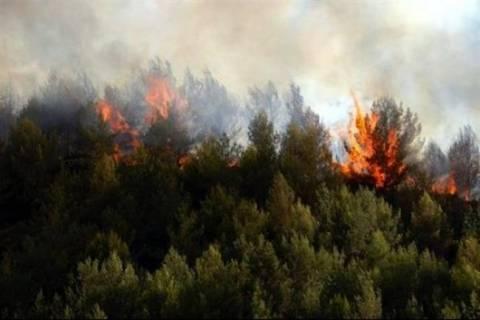 Θεσσαλονίκη: Αυξημένος κίνδυνος πυρκαγιών στο Σέιχ Σου