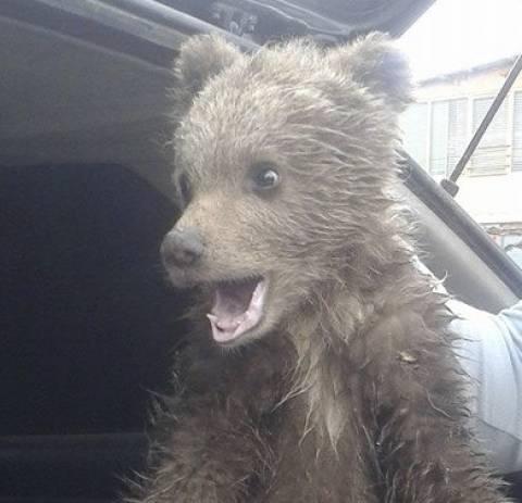 Μικρό αρκουδάκι βρέθηκε στην Καστοριά (pic)