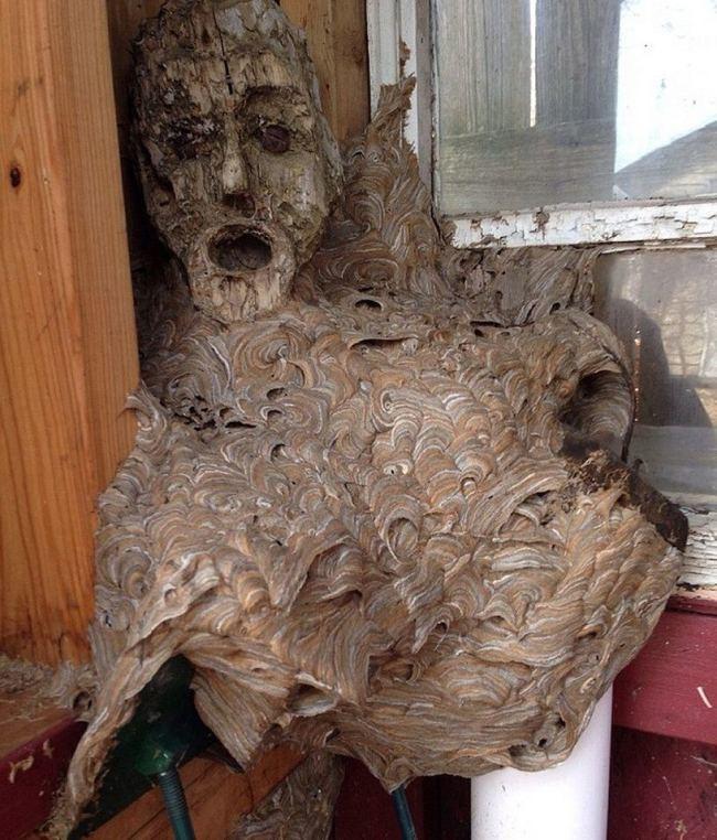 Αυτή είναι η πιο τρομακτική φωλιά σφηκών που έχετε δει! (photo)