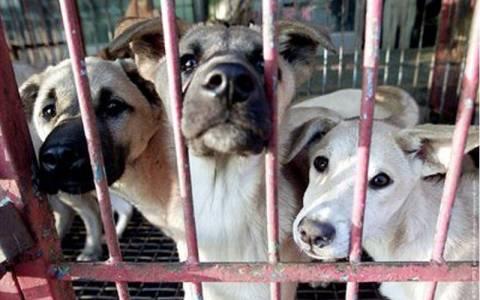 Κύπρος: Στη μάχη των Ευρωεκλογών το πρώτο κόμμα για τα ζώα