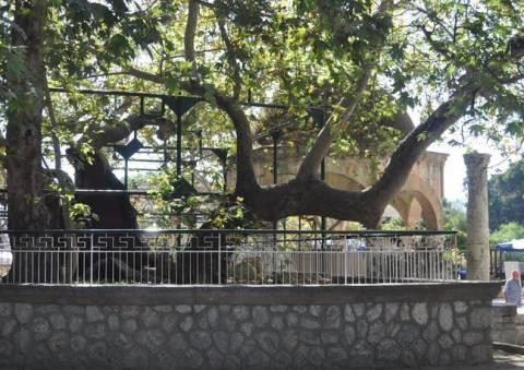 Το Δέντρο του Ιπποκράτη στο Εθνικό Ίδρυμα Υγείας των ΗΠΑ