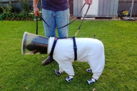 Ο πρώτος σκύλος μελισσοκόμος! (photos)