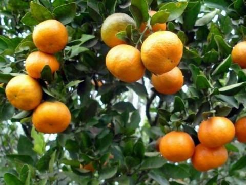 Ηράκλειο: Του πούλησαν πορτοκάλια για να του κλέψουν 200 ευρώ